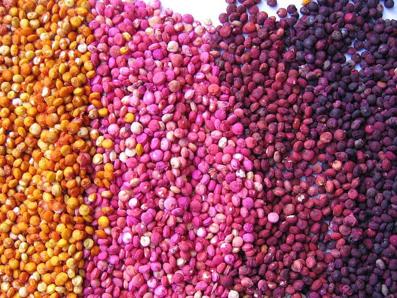 Quinoa - semi